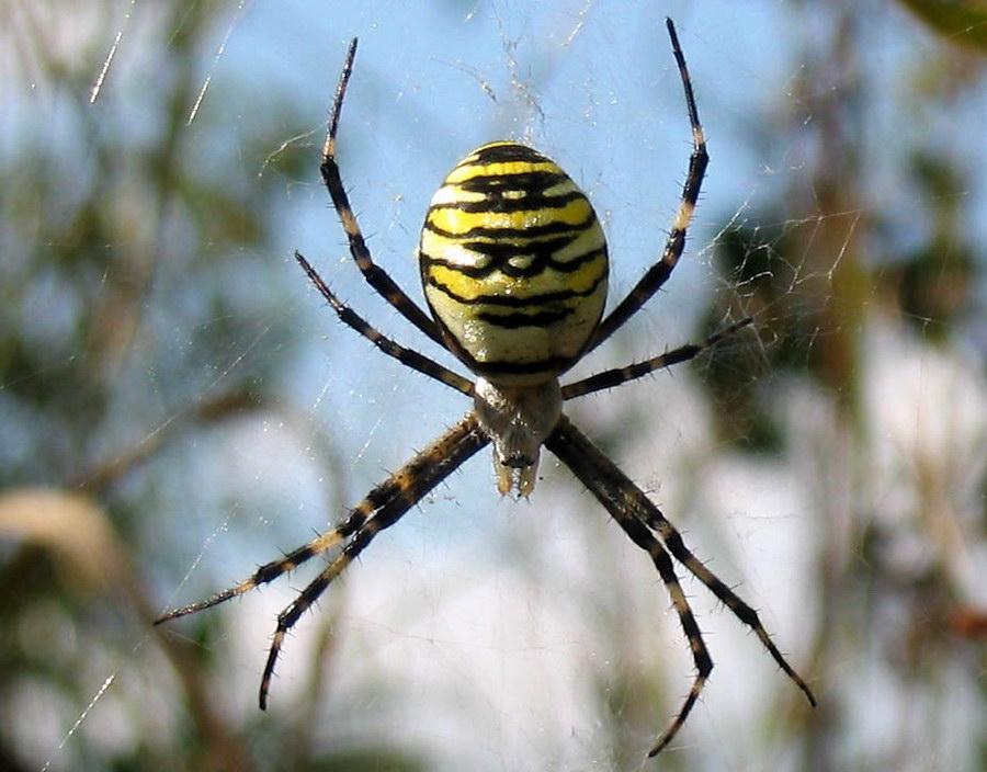 приметы паук на теле ходит делать если влюбилась